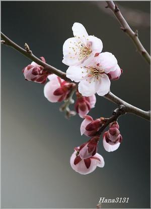 北国の春 -