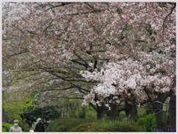 猿江恩賜公園・花々021) - 趣味の写真 ~OLYMPUS E-M1MarkⅡ、PenF~