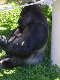 新居のシャバーニ家(1)[東山動物園] - a diary of primates