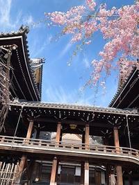 シリーズ~スタッフのスマホから2019~その4.「京都発・桜だより」 - IDEAL STYLE INC ではたらく staff blog
