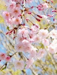 4/13、NC700Sで茅ヶ崎里山公園・宝泉寺ほか ~ 後編 - 某の雑記帳
