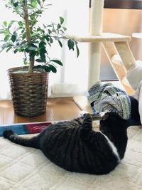 左胸の圧迫感 - いぬ猫フェレット&人間