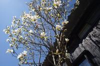 春の花 - Studio Okamoto の 徒然日記