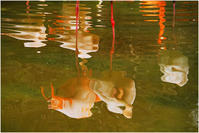 フラミンゴ池の幻 - HIGEMASA's Moody Photo