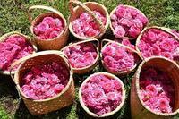 今年は6月にお伺いさせて頂く予定です。 - 元木はるみのバラとハーブのある暮らし・Salon de Roses