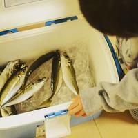 釣った魚で晩ごはん^^ - 料理教室 あきさんち