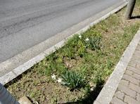 街歩きは楽しい・・・ - 【出逢いの花々】