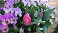 春爛ま・・・ - 今から・花
