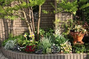 ライラックワンダー 春を楽しむ庭 - miyorinの秘密のお庭
