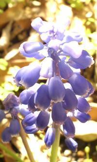 きれいな紫のドレス - 365日・花と短歌