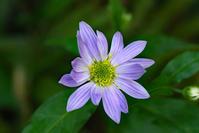 庭の花 - 閑居堂 ~ のんびり小父さんの独り言