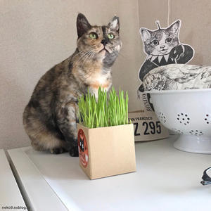 猫草発見/PC未だ使えず - 賃貸ネコ暮らし 賃貸住宅でネコを室内飼いする工夫