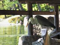 漁に出る - 瞳の記憶