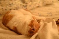 一日中ベッドで… - ちわりくんのありふれた毎日II