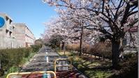 平成最期のお花見 - オイラの日記 / 富山の掃除屋さんブログ