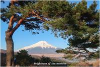 富士山野鳥 - Brightness of the moment