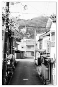 桜土手から見えた街。 - Yuruyuru Photograph