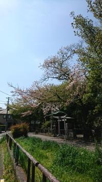 2019.04.18ボランティア - Aromapureのつぶやき