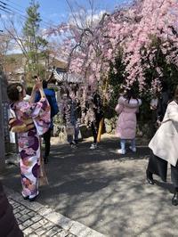 桜から新緑へ - g's style day by day ー京都嵐山から、季節を楽しむ日々をお届けしますー