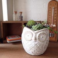 フェイク多肉のフクロウポット - 森の工房 Flower Work ナチュラルスローな空間