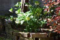 水鉢の植え替え - refresh-3