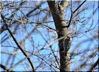 上弦の月と野鳥 - 北海道photo一撮り旅