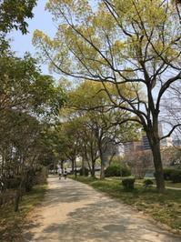 今年の桜2 - ホリー・ゴライトリーな日々