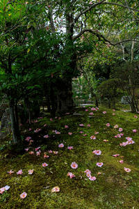 有楽椿散る(等持院) - 花景色-K.W.C. PhotoBlog