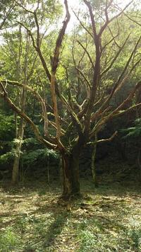 Forest trees - クリエイティブライフ