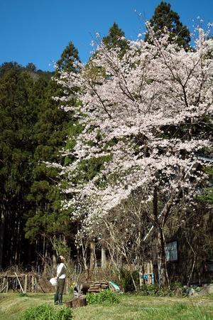 花の庭・・・区長会 - 朽木小川より 「itiのデジカメ日記」 高島市の奥山・針畑からフォトエッセイ