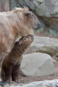 ファルコ - 動物園へ行こう