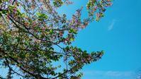 葉桜🌸そろそろ桜も... - emi yoga (エミ ヨガ)始めます(^-^)