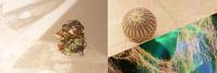 写真を楽しむイベント「魅惑の刺繍布でアートフォトに挑戦!」 - カメラの東光堂