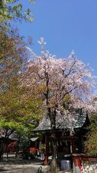明日は待ちに待った天秤座の満月のお茶会を開催するよ~☆ - 占い師 鈴木あろはのブログ