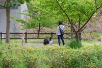 春の小川 散歩 - にゃんてワンダホー!