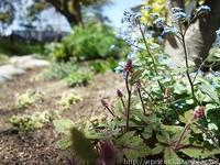 春の庭しごと庭に咲いた春の花 - シンプルで心地いい暮らし