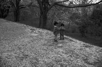 kaléidoscope dans mes yeux2019半径500メートルの情景#63櫻の季節#24 - Yoshi-A の写真の楽しみ