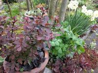 雨の庭の植物たち - natural garden~ shueの庭いじりと日々の覚書き