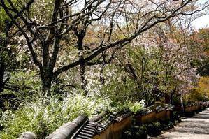 水芭蕉が咲いている・・・。 山里の春やな~ - 写録番外編