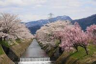 桜と共に・・・ - きょうから あしたへ その2