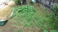 家庭菜園も草取り - うちの庭の備忘録 green's garden