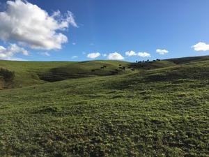 秋晴れ、薪、琥珀、シンバ/ Autumn Days at Aotea Organic Farm - アメリカからニュージーランドへ
