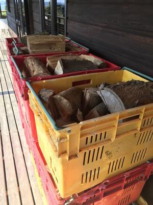 秋晴れ、薪、琥珀、シンバ/Autumn Days at Aotea Organic Farm -