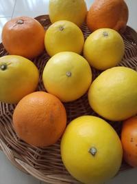 愛媛の柑橘で朝ごはん - 料理研究家ブログ行長万里  日本全国 美味しい話