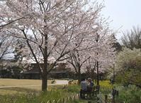 俣野別邸公園の桜 - ソナチネアルバム