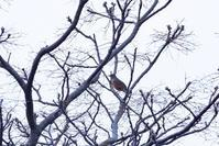 4/19今朝は内院へ - ゆるるばってん沈まんばい的生活 in 対馬