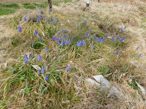春が始動 -