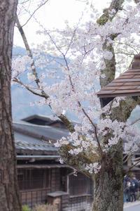 宿場町のSAKURA - 気ままにお散歩