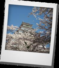 鶴ヶ城にお花見へ - khh style