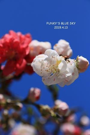 花桃のころ*** - FUNKY'S BLUE SKY